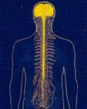 Neuroni.jpg