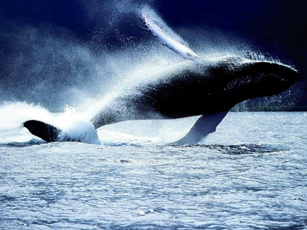 balena4.jpg