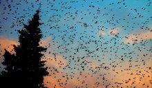 gli-uccelli-the-birds-L-LIbvV_.jpeg