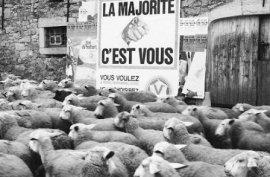 pecore.jpg