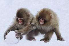 scimmieneve.jpg