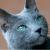 L'isola del Gatto Blu